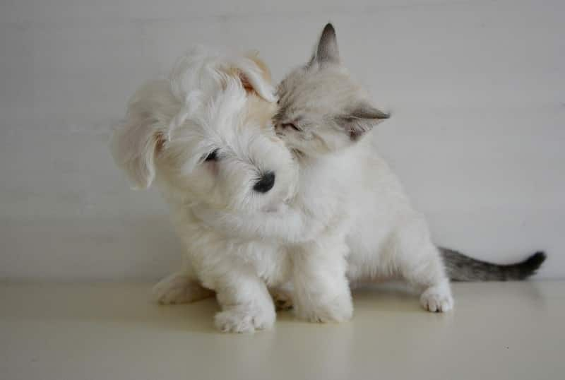 Cat and Dog Kiss