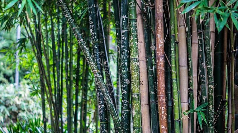 Bamboo Numerology 2