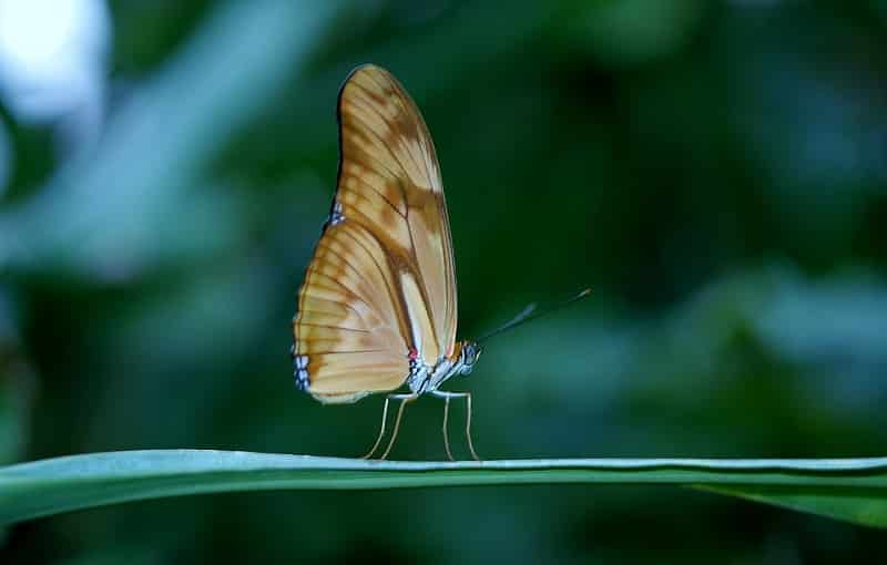 Butterfly Numerology 3
