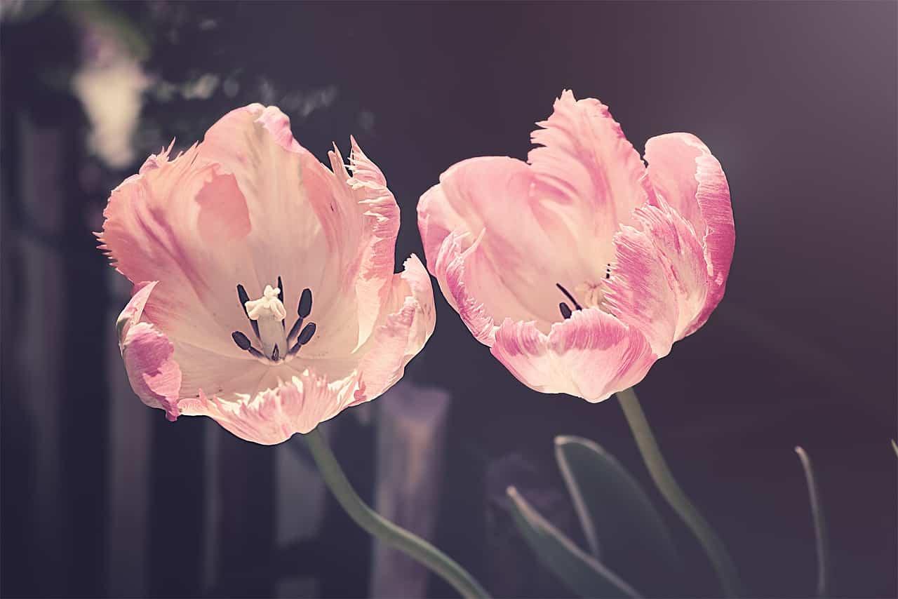 Love Horoscope Flowers