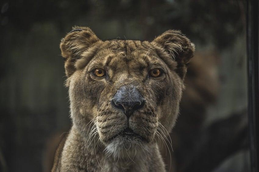 Ruthless Animal