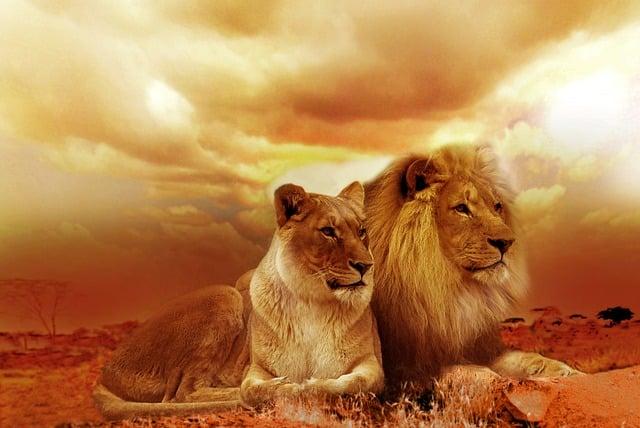 Leo Season 2018 Lion Symbol