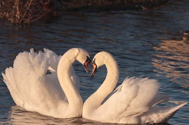 Weekly Love Horoscope Love Birds